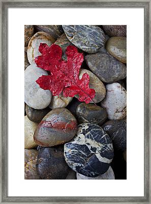 Red Leaf Wet Stones Framed Print by Garry Gay
