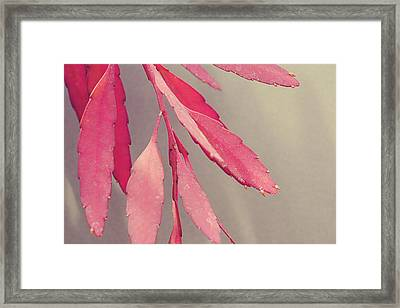 Red Leaves Framed Print by Joy StClaire