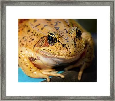 Red Leg Frog Framed Print by Jean Noren