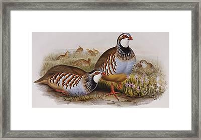 Red-legged Partridges Framed Print by John Gould