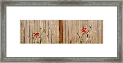 Red Lilies Framed Print by Barbara McDevitt