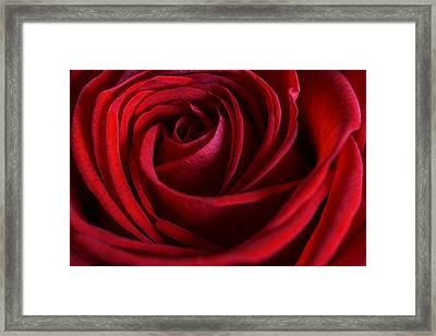 Red Love Framed Print by Cindy Grundsten
