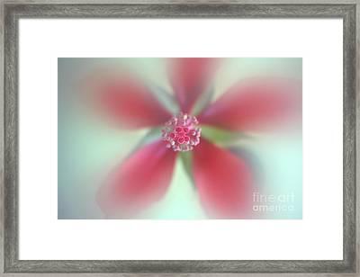 Red Macro Floral Art Framed Print by Ella Kaye Dickey