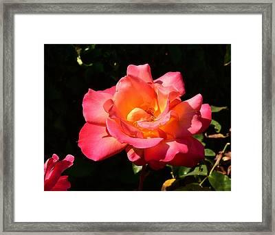 Red Orange Rose Closeup 2 Framed Print by Linda Brody