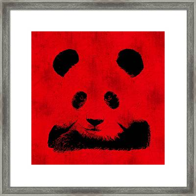 Red Panda Framed Print by Laura Brightwood