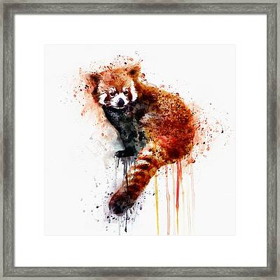 Red Panda Framed Print by Marian Voicu