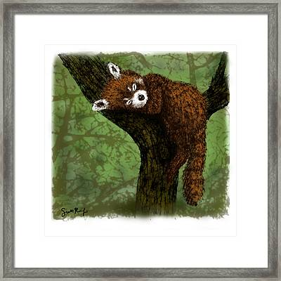 Red Panda Napping Framed Print by Scott Rolfe