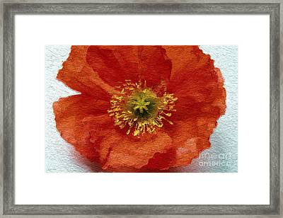 Red Poppy Framed Print by Linda Woods