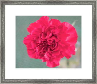 Red Rose Framed Print by Dick Willis