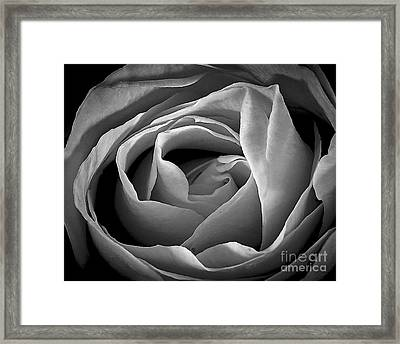 Red Rose In Infrared Framed Print by Charles Muhle