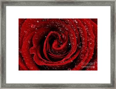 Red Rose Framed Print by Mark Johnson
