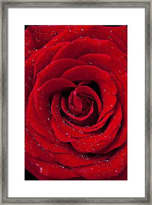 Red Rose With Dew Framed Print by Garry Gay