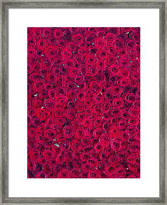 Red Roses Framed Print by Vitor Costa