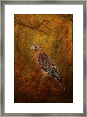 Red Shouldered Hawk In Woodlands Framed Print by Carla Parris