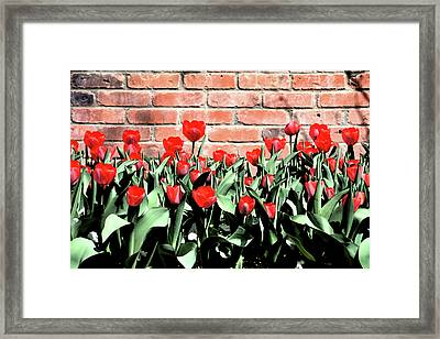 Red Spring Tulips 2 Framed Print by Angelina Vick