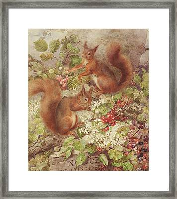 Red Squirrels Gathering Fruits And Nuts Framed Print by Rosa Jameson
