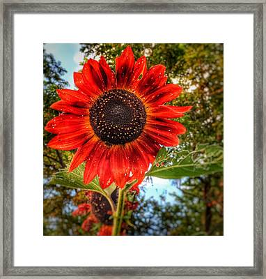 Red Sun Framed Print by Jame Hayes