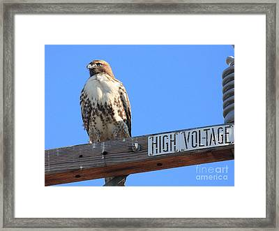 Red Tailed Hawk On High Voltage Framed Print by Wingsdomain Art and Photography