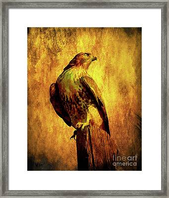 Red Tailed Hawk . Texture . 40d10167 Framed Print by Wingsdomain Art and Photography
