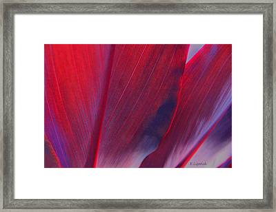 Red Ti Leaves At Last Light Framed Print by Kerri Ligatich