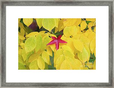 Red Framed Print by Tim Gainey