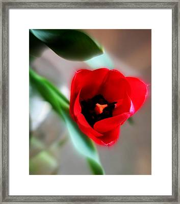 Red Tulip Framed Print by Cathie Tyler