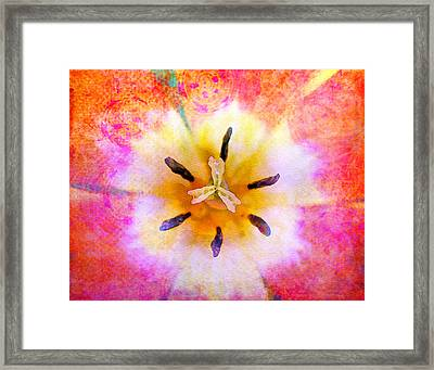 Red Tulip Framed Print by Moon Stumpp