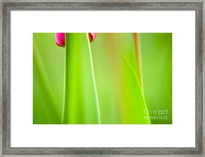 Red Tulip Framed Print by Silke Magino