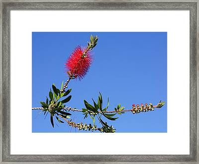 Red Up Framed Print by YT Photo