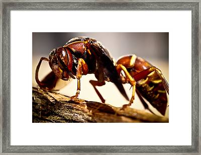 Red Wasp Framed Print by Ryan Kelly
