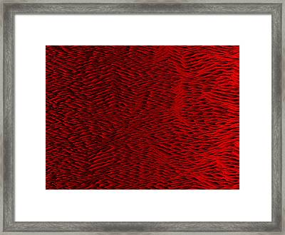 Red.428 Framed Print by Gareth Lewis