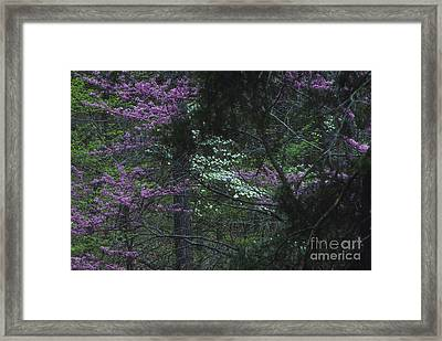Redbuds And Dogwoods Framed Print by Lowell Anderson