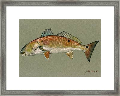 Redfish Watercolor Painting Framed Print by Juan  Bosco