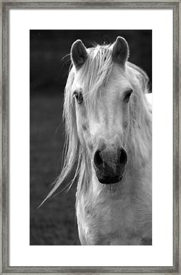 Redwings Horse In Monotone2 Framed Print by Darren Burroughs