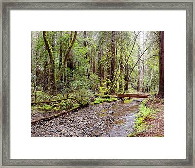 Redwood Creek Flowing Through Muir Woods National Monument - Mill Valley Marin County California Framed Print by Silvio Ligutti