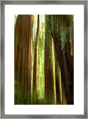 Redwood Dream Framed Print by Bill Gallagher