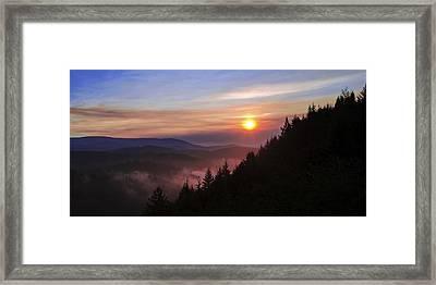 Redwood Sun Framed Print by Chad Dutson
