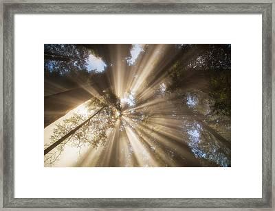 Redwoods Sunburst Framed Print by Kunal Mehra