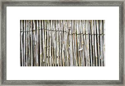 Reed Background Framed Print by Tom Gowanlock