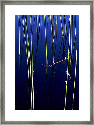 Reeds Of Reflection Framed Print by Chris Brannen