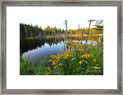 Reflect Framed Print by Catherine Reusch  Daley
