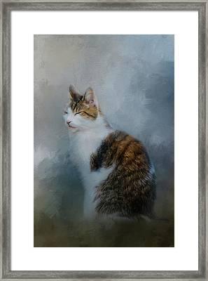 Reflect Framed Print by Jai Johnson
