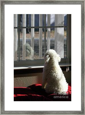Reflecting Dog Daze Framed Print by Joy Tudor
