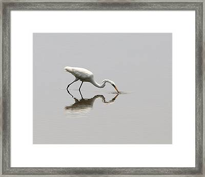 Reflecting Egret Framed Print by Al Powell Photography USA