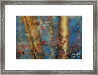 Reflecting Gold Tones Framed Print by Elizabeth Dow