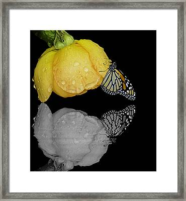 Reflecting Our True Colors To The World Framed Print by Diane Schuster