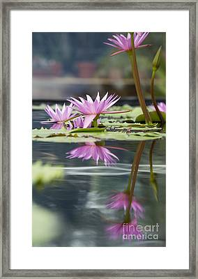 Reflecting Waterlily  Framed Print by Tim Gainey