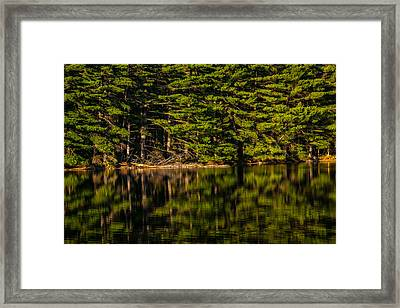 Reflection Of The Pines Framed Print by Karol Livote