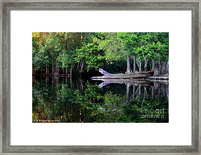 Reflection Off The Withlacoochee River Framed Print by Barbara Bowen