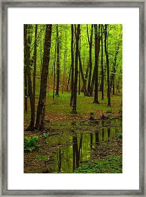 Reflections In The Woods Framed Print by Karol Livote